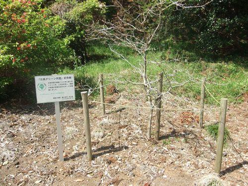 日英同盟植樹
