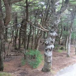 奥庭自然公園