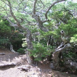 奥庭自然散策路