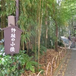「竹林の小径」