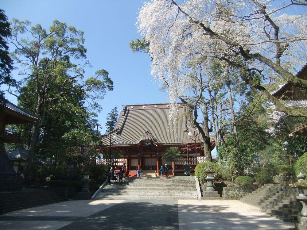 富士山周辺の桜の名所・富士宮市「大石寺」場所と桜の見頃