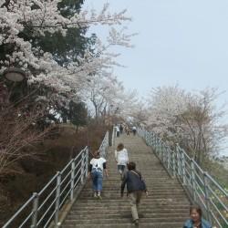 新倉山浅間公園