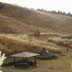 十里木高原 ススキ