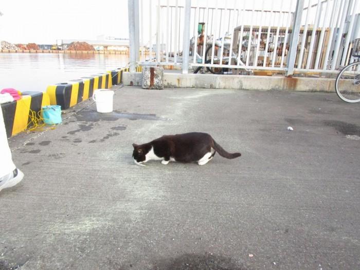 沼津港の釣り