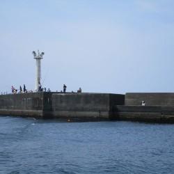 沼津港 釣り6