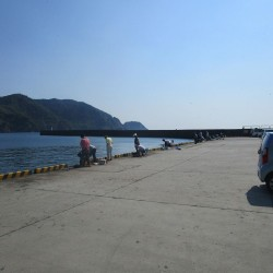松崎新港 釣り