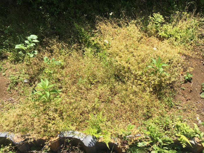 雑草の生えた荒れた地面