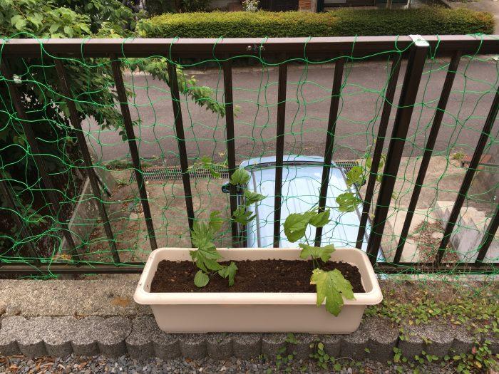 ゴーヤの苗が入ったプランターを茶色の柵の近く置き柵に緑のネットを張る