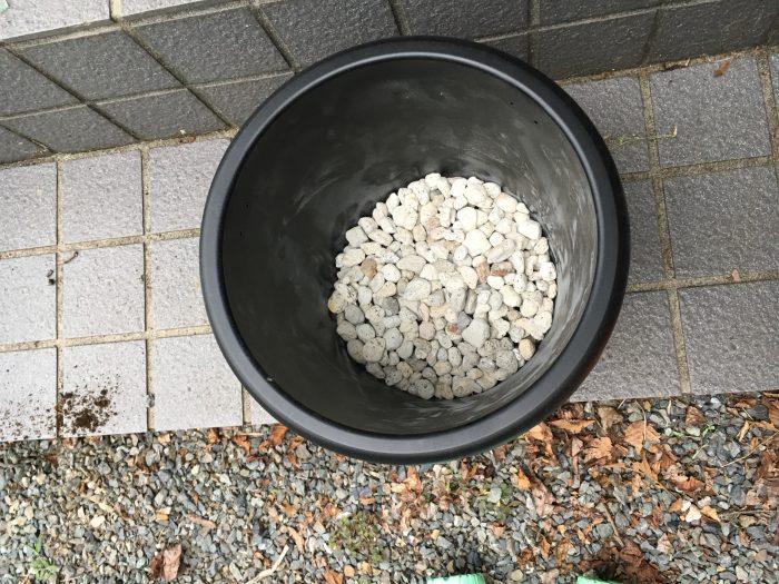 鉢の底に白い石を2センチから3センチほど敷き詰める