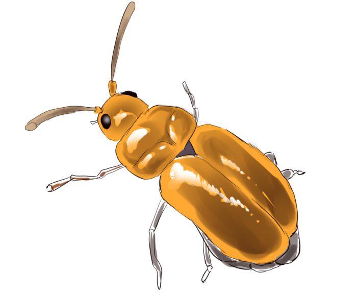 ハリウネムシのイラスト。金色のカナブンに似たムシが描かれている。