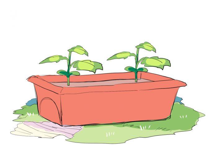ゴーヤの苗を、2つプランターに植え付けたイラスト