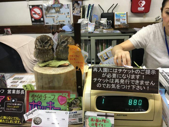 フクロウ二匹がレジの横にいる写真