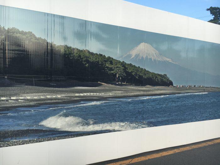 富士山の見えている松原の写真