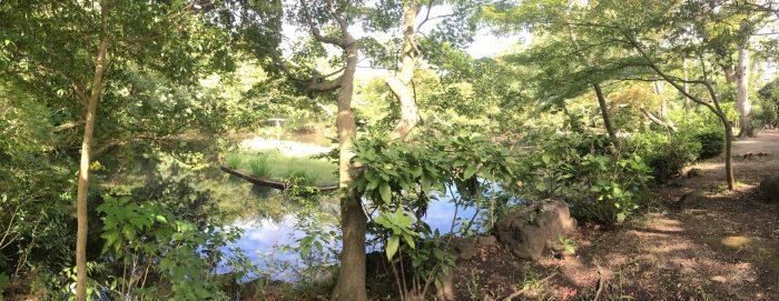池付近の写真
