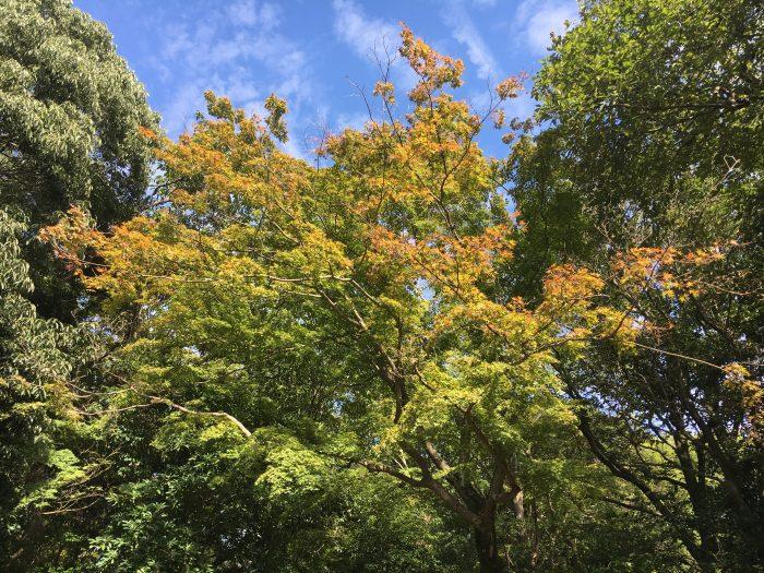少し色づいている木々の写真