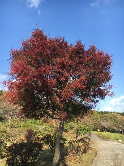 紅葉の木の写真