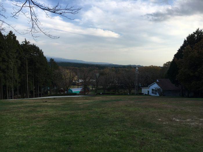 丘からみた林の写真