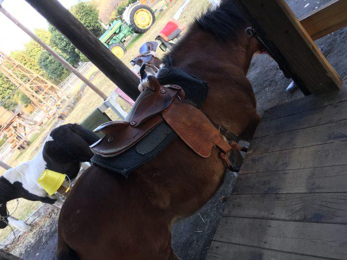 馬にくらがついている写真