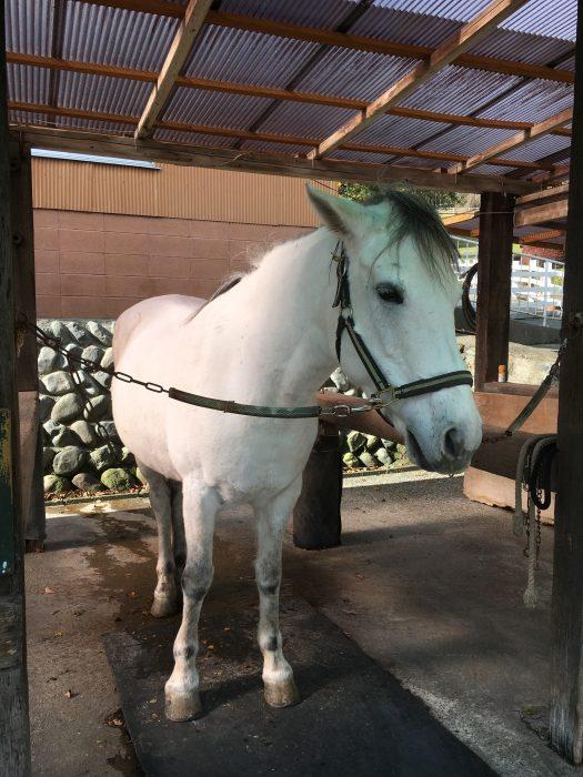 白い馬の写真