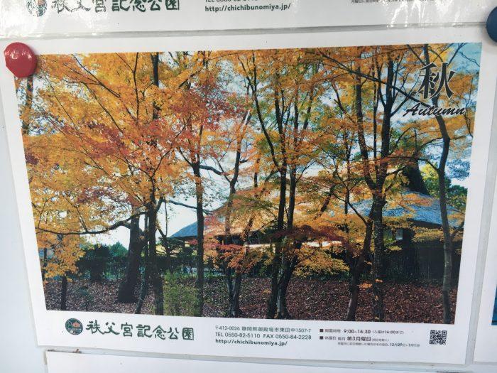 秋の紅葉の写真の写真