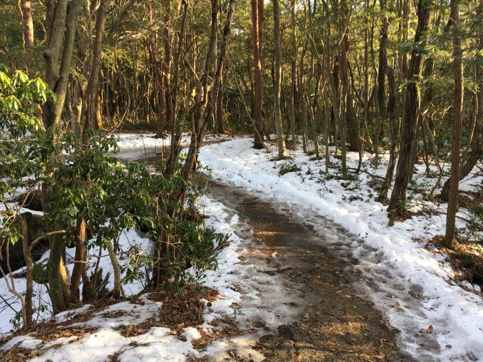 散策コースの写真