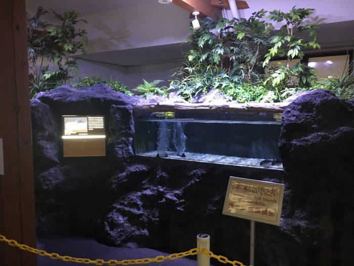 水槽の写真