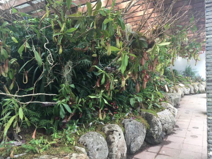 食虫植物の写真