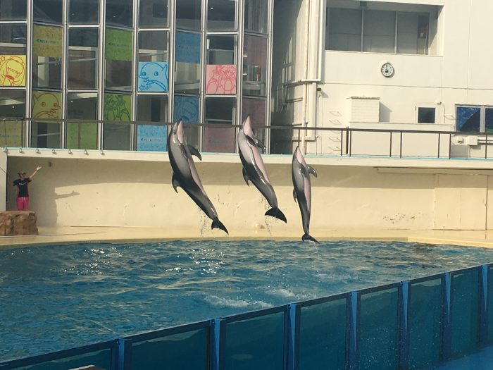 イルカのショーの写真