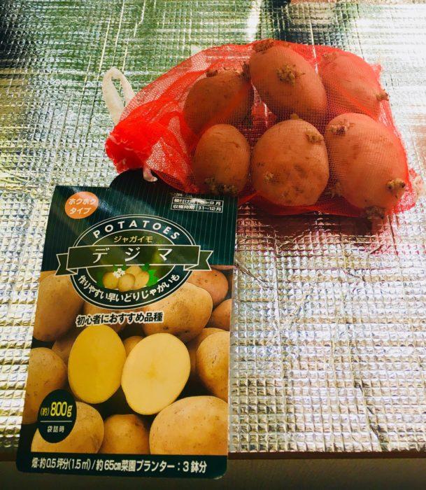 種芋の写真