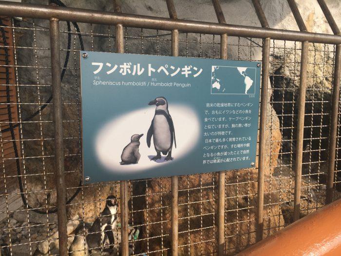 ペンギンの説明書き写真