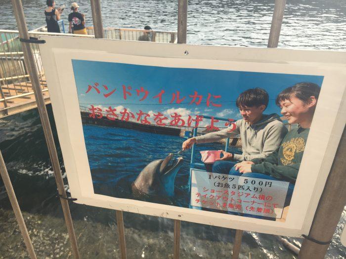 イルカの餌やりのコーナー