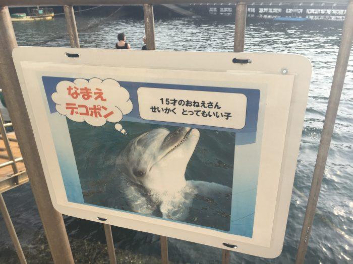 イルカの紹介板の写真