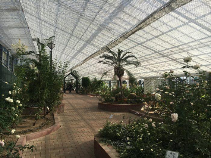 温室内の写真