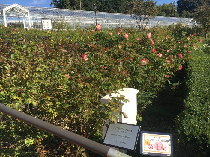 一番人気のバラの写真