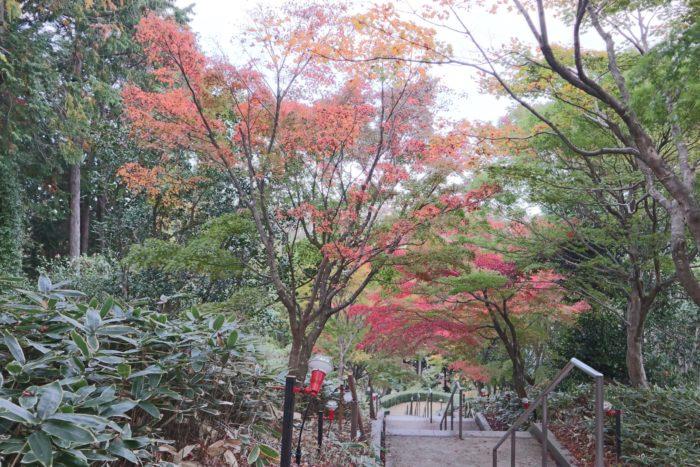 あんまり赤くない紅葉の写真