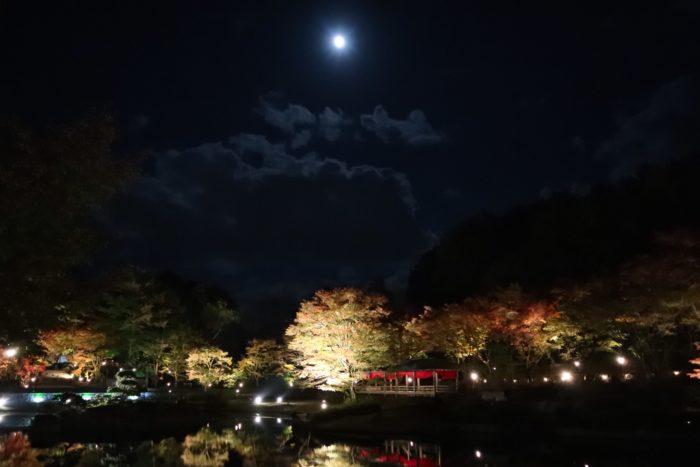 夜空とライトアップされた紅葉の写真