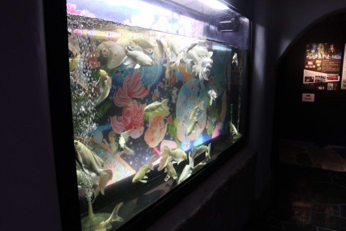 黄金の金魚の水槽の写真