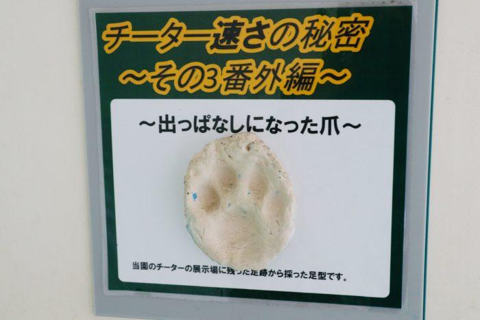 チーターの足拓の写真