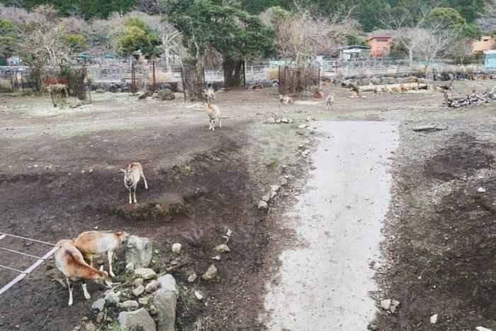 動物の写真