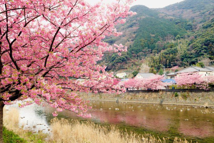 川に映る桜並木の写真