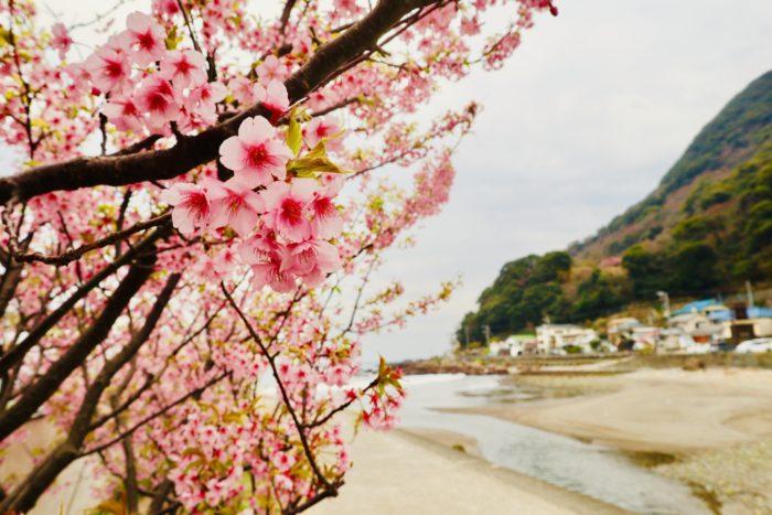 桜と海の写真